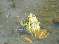 ヘビに睨まれたカエル・・・その2 - 自然がいっぱい3は終了しました。
