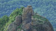 知床ウトロ漁港のゴジラ岩でオオセグロカモメが営巣 - Life with Birds 3