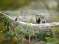 蜘蛛の巣 - エンジェルの画日記・音楽の散歩道