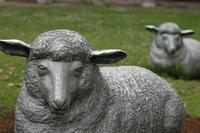 羊が出てきた日@足立ベルモント公園 - 設計事務所 arkilab