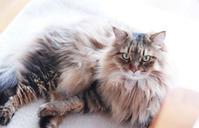 なんかかわいいと思った猫のしぐさ - きょうだい猫と仲良し暮らし