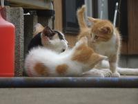 親子 - ネコと裏山日記