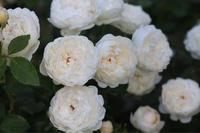 反省のグラミスキャッスル - my small garden~sugar plum~