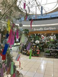 明日は七夕。。。なんですけどね(^^;; - ブレスガーデン Breath Garden 大阪・泉南のお花屋さんです。バルーンもはじめました。