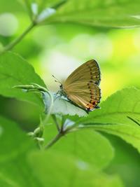 早目のウラキン探索が功を奏す - 蝶超天国