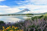 富士山と彩 - 風とこだま