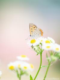 美しさと厳しさと - M2_pictlog