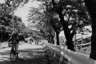 夏の子 - フォトな日々