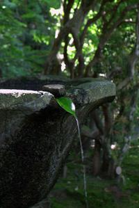 緑を楽しむ - 京都ときどき沖縄ところにより気まぐれ