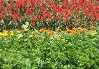 39区役所前の彫刻『夢』を囲う花壇 - 荒川区百景、再発見
