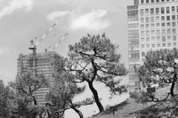 旧芝離宮恩賜庭園の撮影会 - フォトサークル      「森羅の会」