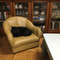 ソファーと猫 - ねこ結び2