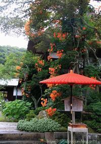 鎌倉海蔵寺の凌霄花 - 暮らしを紡ぐ