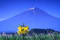 30年6月の富士(24)大石公園の富士 - 富士への散歩道 ~撮影記~