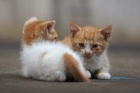 兄弟 - ネコと裏山日記