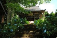 紫陽花寺*高源院を朝一で訪れました〜 - からっ風にのって♪
