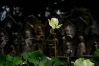 喜光寺・蓮の花 - ちょっとそこまで