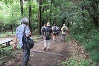 ■横浜自然観察の森を歩く18.7.7 - 舞岡公園の自然2