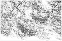 風に揺れるヤナギ - my Photo blog・・季節の便り