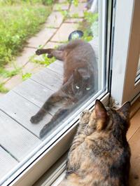 その後の黒猫ちゃん(改めクーちゃん) - 猫と夕焼け