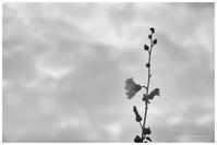 曇り空 - BobのCamera