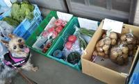 ■枝豆の季節■ - HANALOG ~ヨーキーとの暮らし~
