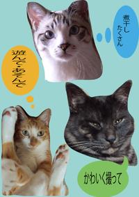 願い事 - ぎんネコ☆はうす