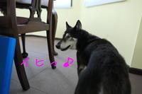 厄日のジェンちゃんとバンビちゃん【動画】 - HAMAsumi-Life