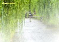 夏の祇園 - カンちゃんの写真いろいろ