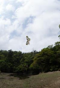 台湾紋白蝶とモンシロチョウin台湾北部&関東地方2018 - ヒメオオの寄り道