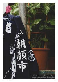 朝顔市 - ♉ mototaurus photography