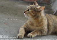 PHOTO! FUN! ZINE!用台湾お蔵出しはなんとsony α7II + Sonnar T* FE 55mm F1.8 ZA(SEL55F18Z)で撮った猫村の作例 - さいとうおりのお気に入りはカメラで。