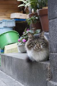 Happy Caturday -impression- #10 - jinsnap_2(weblog on a snap shot)