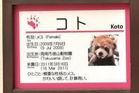 もふてく☆ゴールデンパン祭り2018京都編・その2 - レッサーパンダ☆もふてく放浪記