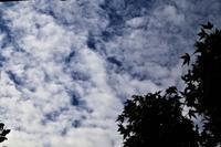 久し振りの青空が - 写真を主とした日記です