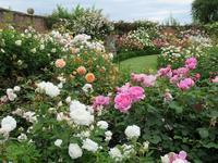 薔薇天国、デヴィッド・オースティン・ローズ・ガーデン 2 -  Der Liebling ~蚤の市フリークの雑貨手帖2冊目~