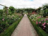 薔薇天国、デヴィッド・オースティン・ローズ・ガーデン 3 -  Der Liebling ~蚤の市フリークの雑貨手帖2冊目~