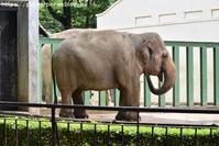 2018年6月 王子動物園 その1 - ハープの徒然草