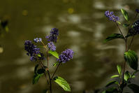 紫色 - memory