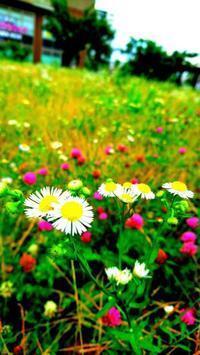 雑草たち。 - 人のカタチを作る日々