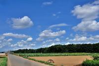 夏の雲 - 空を見上げて