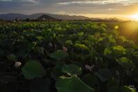 橿原市 藤原宮の夕景:5 - ぶらり記録(写真) 奈良・大阪・・・