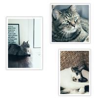 ねこブロマイド - ゆきなそう  猫とガーデニングの日記