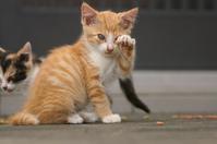 お手入れ - ネコと裏山日記