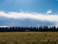 引っ越してきた羊たち - bluecheese in Hakuba & NZ:白馬とNZでの暮らし