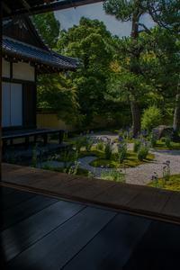 蘆山寺の桔梗 - 鏡花水月