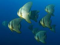 ボートでワイド!八丈ブルー満喫🎵 - 八丈島ダイビングサービス カナロアへようこそ!