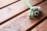 シロツメクサの花束。 - Precious*恋するカメラ