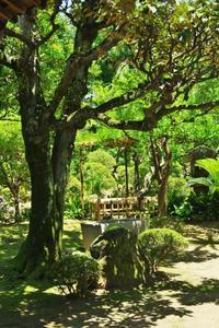 隅田川界隈の風景5 - はーとらんど写真感