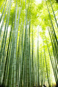 竹の寺 報国寺 - ようこそ風の散歩へ